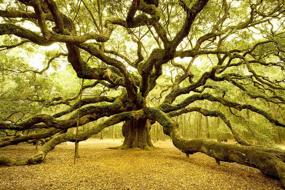 Baumpflege Naturdenkmal